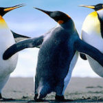 Google Penguin 4.0 Algorithm Update: Features, Demerits and  Recovery